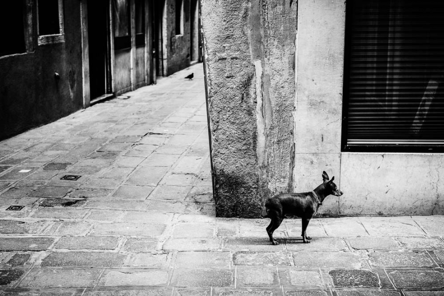 http://rikardosterlund.com/files/gimgs/th-20_TPW-Venice-20150301-5081.jpg