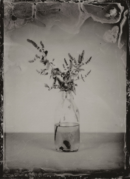 http://rikardosterlund.com/files/gimgs/th-20_Wetplate-scan-21060418-ToiletFlowerII.jpg